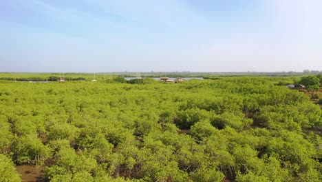 Aerial-Over-Vast-Mangrove-Swamps-On-The-Gambia-River-The-Gambia-West-Africa-Ends-In-Makeshift-Lodge-Or-Remote-Hostel