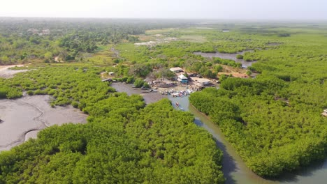 Aerial-Over-Vast-Mangrove-Swamps-On-The-Gambia-River-The-Gambia-West-Africa-Ends-In-Makeshift-Lodge-Or-Remote-Hostel-1