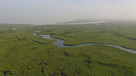 Aerial-Over-Vast-Mangrove-Swamps-On-The-Winding-Gambia-River-The-Gambia-West-Africa