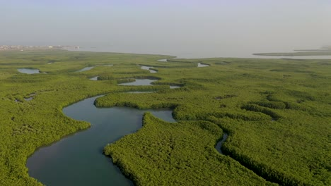Aerial-Over-Vast-Mangrove-Swamps-On-The-Winding-Gambia-River-The-Gambia-West-Africa-1