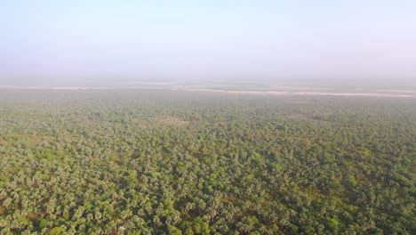 Aerial-Over-The-Interior-Of-Gambia-West-Africa-With-Palm-Forests-And-Haze