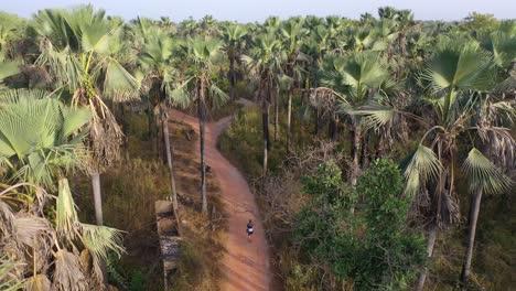 Antena-De-Un-Hombre-Caminando-A-Través-De-Los-Bosques-De-Palmeras-De-Gambia-África-Occidental