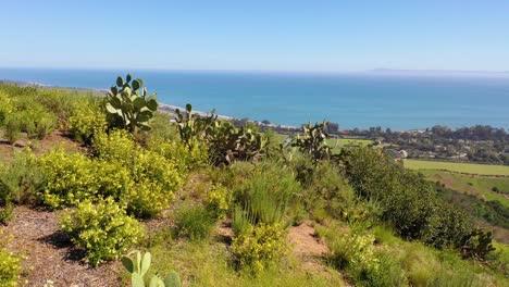 Vista-Aérea-Over-Cactus-Reveals-Carpinteria-California-And-Establishing-Santa-Barbara-Coastline-Below