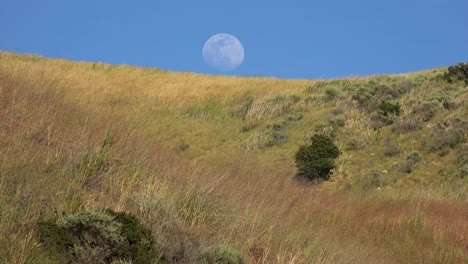 A-Full-Moon-Rises-Over-A-Hillside-In-California-With-Grass-Blowing-In-This-Beautiful-Nature-Shot
