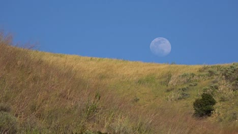 A-Full-Moon-Rises-Over-A-Hillside-In-California-With-Grass-Blowing-In-This-Beautiful-Nature-Shot-1