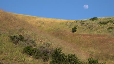 A-Full-Moon-Rises-Over-A-Hillside-In-California-With-Grass-Blowing-In-This-Beautiful-Nature-Shot-3