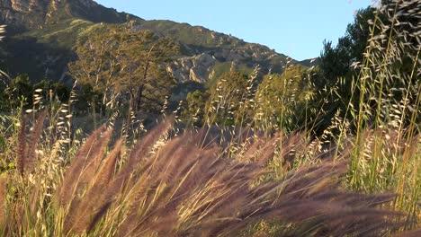 Santa-Ana-Sundowner-Winds-Blow-Through-The-Mountains-And-Grasses-Of-The-Santa-Ynez-Mountains-Near-Santa-Barbara