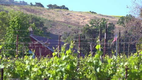 Rack-Focus-Of-A-Small-Organic-Farm-Flying-The-American-Flag-In-Santa-Ynez-Santa-Barbara-California