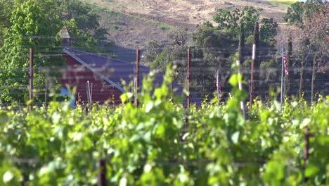 Rack-Focus-Of-A-Small-Organic-Farm-Flying-The-American-Flag-In-Santa-Ynez-Santa-Barbara-California-1