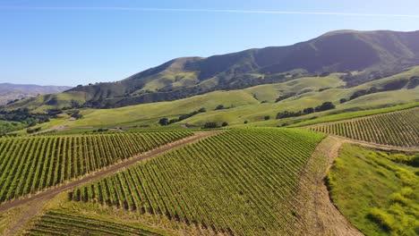 Good-Aerial-Over-The-Wine-Growing-Region-Of-Santa-Ynez-Vineyards-In-Santa-Barbara-County-California