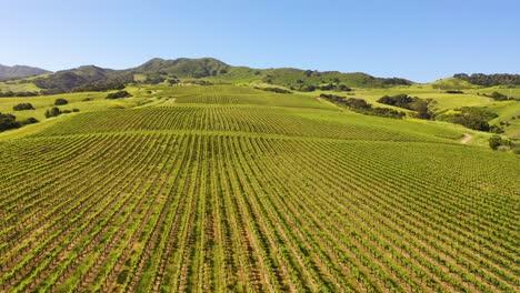 Good-Aerial-Over-The-Wine-Growing-Region-Of-Santa-Ynez-Vineyards-In-Santa-Barbara-County-California-1
