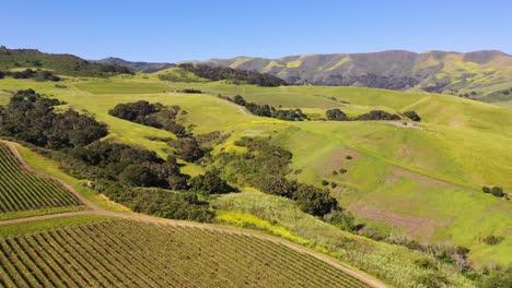 Good-Aerial-Over-The-Wine-Growing-Region-Of-Santa-Ynez-Vineyards-In-Santa-Barbara-County-California-2