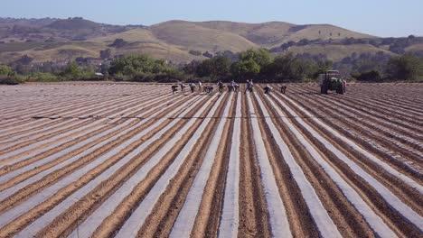 Mexican-Farm-Workers-Work-In-A-Commercial-Farm-Field-On-A-Local-Organic-Farm-In-Santa-Ynez-California