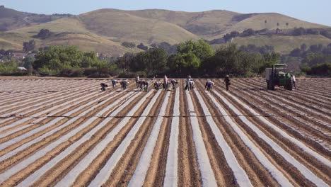 Mexican-Farm-Workers-Work-In-A-Commercial-Farm-Field-On-A-Local-Organic-Farm-In-Santa-Ynez-California-1