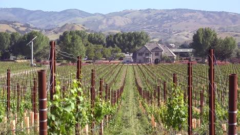 Establishing-Shot-Of-A-Picturesque-Winery-In-The-Santa-Ynez-Valley-Santa-Barbara-Vineyard-California