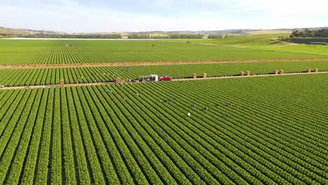Excellent-Aerial-Of-Vast-Commercial-California-Farm-Fields-With-Migrant-Immigrant-Mexican-Farm-Workers-Picking-Crops-2