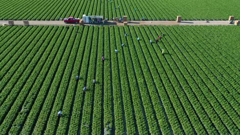 Excellent-Aerial-Of-Vast-Commercial-California-Farm-Fields-With-Migrant-Immigrant-Mexican-Farm-Workers-Picking-Crops-3