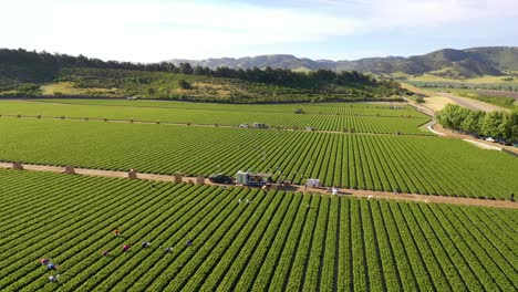 Excellent-Aerial-Of-Vast-Commercial-California-Farm-Fields-With-Migrant-Immigrant-Mexican-Farm-Workers-Picking-Crops-4