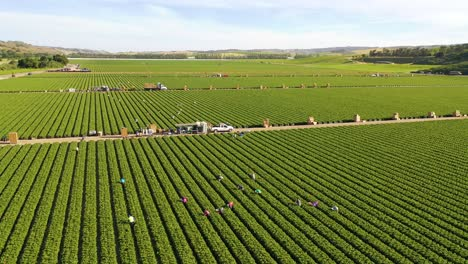 Excellent-Aerial-Of-Vast-Commercial-California-Farm-Fields-With-Migrant-Immigrant-Mexican-Farm-Workers-Picking-Crops-5