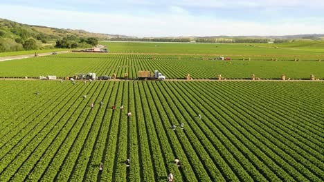 Excellent-Aerial-Of-Vast-Commercial-California-Farm-Fields-With-Migrant-Immigrant-Mexican-Farm-Workers-Picking-Crops-6