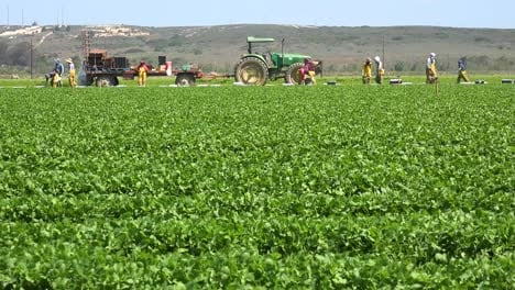 Migrant-Mexican-And-Hispanic-Farm-Workers-Labor-In-Agricultural-Fields-Picking-Crops-Vegetables