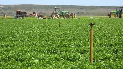Migrant-Mexican-And-Hispanic-Farm-Workers-Labor-In-Agricultural-Fields-Picking-Crops-Vegetables-1