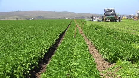 Migrant-Mexican-And-Hispanic-Farm-Workers-Labor-In-Agricultural-Fields-Picking-Crops-Vegetables-3