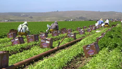 Migrant-Mexican-And-Hispanic-Farm-Workers-Labor-In-Agricultural-Fields-Picking-Crops-Vegetables-7