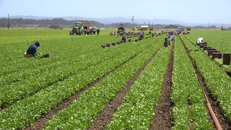 Migrant-Mexican-And-Hispanic-Farm-Workers-Labor-In-Agricultural-Fields-Picking-Crops-Vegetables-9