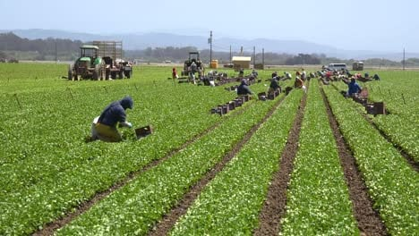 Migrant-Mexican-And-Hispanic-Farm-Workers-Labor-In-Agricultural-Fields-Picking-Crops-Vegetables-10