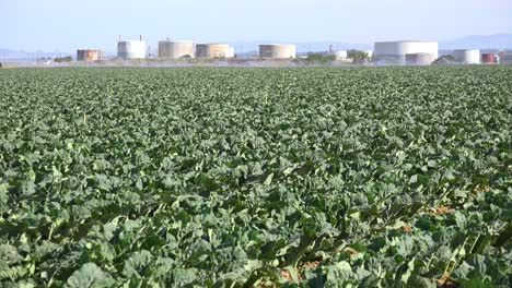 Oil-Storage-Tanks-Share-Agricultural-Fields-With-Crops-Near-Santa-Maria-California