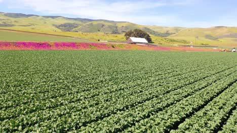 Aerial-Over-Fields-Of-Lettuce-And-Picturesque-Farm-Near-Santa-Maria-Santa-Barbara-California-2