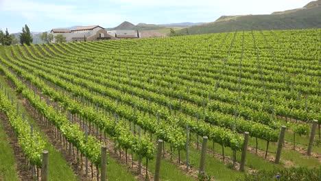 A-Beautiful-Winery-And-Vineyards-In-The-Santa-Ynez-Region-Of-Santa-Barbara-California