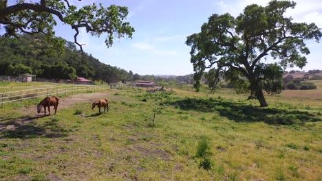 Beautiful-Rising-Aerial-Over-A-Horse-Farm-Or-Ranch-In-Santa-Barbara-County-California