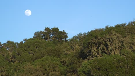 A-Full-Moon-Rises-Over-A-Hillside-In-Central-California-In-This-Beautiful-Nature-Shot
