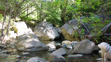 Slow-Aerial-Through-A-Green-Forest-Waterfall-Environment-And-Dog-Suggests-Wilderness-Santa-Ynez-Mountains-California