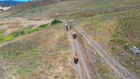 Aerial-Of-Horses-Grazing-On-A-Ranch-Or-Farm-Near-Santa-Barbara-California