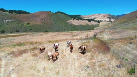 Aerial-Of-Horses-Grazing-On-A-Ranch-Or-Farm-In-The-Santa-Ynez-Mountains-Near-Santa-Barbara-California