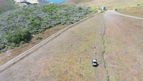 Aerial-Of-A-Rancher-Taking-Dogs-For-A-Run-Behind-Atv-On-A-Large-Farm-In-Santa-Barbara-County-California