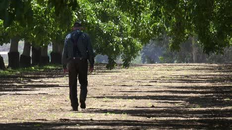 An-Elderly-Farmer-Walks-In-His-Walnut-Orchard-In-Lompoc-California