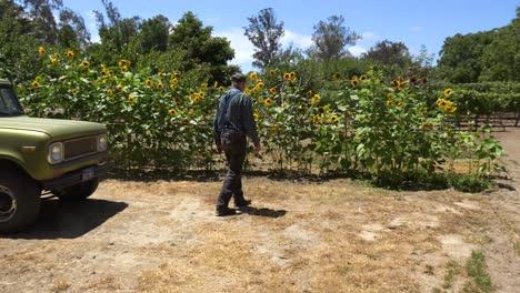 An-Elderly-Farmer-Inspects-His-Sunflowers-On-A-Ranch-Near-Lompoc-California