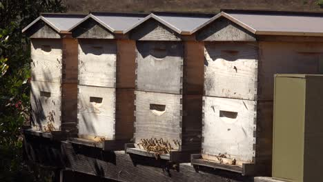 Bee-Boxes-House-Honey-Bees-Are-Raised-At-An-Apiary-Suggests-Beekeeping