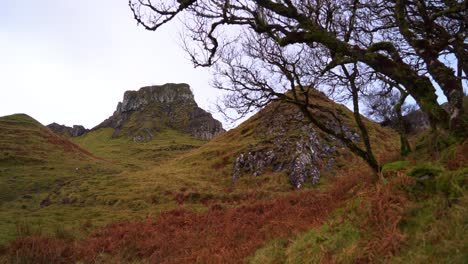 Trees-and-branches-are-seen-on-a-windy-day-on-the-Isle-of-Skye-s-Fairy-Glen-in-Scotland