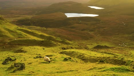 Sheep-are-seen-grazing-on-the-Quiraing-landslip-on-the-Isle-of-Skye-in-Scotland-1