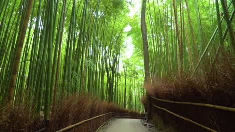 Footage-is-filmed-along-a-walkway-in-the-Arashiyama-Bamboo-Forest-of-Kyoto-Japan