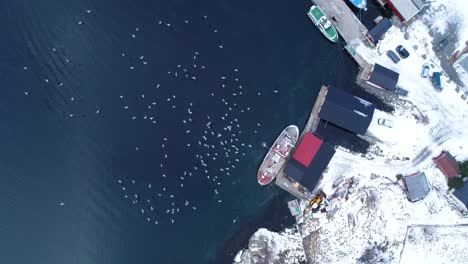 A-Bird-Seyeview-Shows-Gulls-Swarming-A-Dock-On-The-Wintry-Lofoten-Islands-Norway