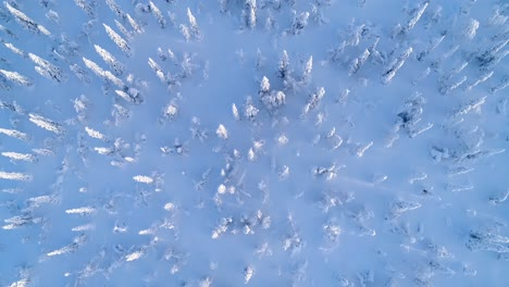 A-Bird\-Seyeview-Shows-Snowcovered-Pine-Trees-In-Sweden