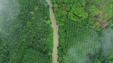 An-Aerial-View-Shows-A-Murky-River-In-Thailand-Lined-By-Palms-And-Other-Trees