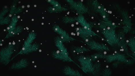 Animated-closeup-Christmas-green-tree-branches-on-winter-landscape-holiday-background