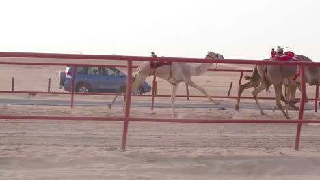 Us-Army-Soldiers-Ride-Alongside-Camels-Racing-In-A-Kuwait-Cultural-Event